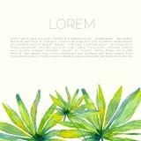 Tropisk broschyrmall med palmblad Royaltyfria Foton