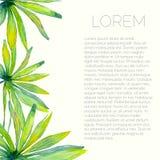 Tropisk broschyrmall med palmblad Royaltyfri Foto