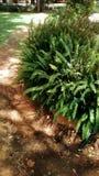 tropisk buske arkivfoto