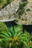 Tropisk Canarian gräsplan gömma i handflatan och sjön Royaltyfri Foto