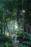 tropisk clearingskogdjungel Arkivbild