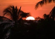 tropisk Costa Rica solnedgång Royaltyfri Foto