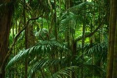 Tropisk djungel Arkivfoton