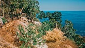 Tropisk djungel Fotografering för Bildbyråer