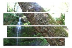Tropisk djungel Art High Quality arkivfoton