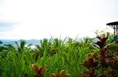 Tropisk djungel för frodig grön regnskog med banhoppningplattformen i södra Eeast asiatisk morgonsoluppgång arkivbild