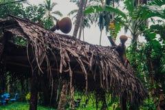 Tropisk djungel med floden royaltyfri foto