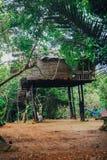 Tropisk djungel med floden royaltyfria foton