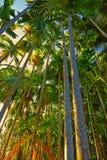 Tropisk djungel på solnedgången. Royaltyfri Bild