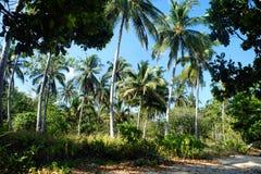 Tropisk djungel Regn Forest Philippines Arkivfoto