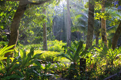 Tropisk djungel, Thailand Arkivbild