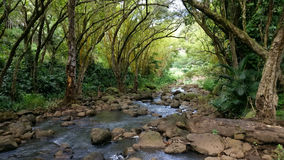Tropisk djungelregnskogflod Royaltyfria Foton