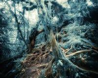 Tropisk djungelskog för fantasi i overkliga färger Begreppslandsc arkivfoto