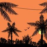 tropisk djungelsolnedgång Arkivbild