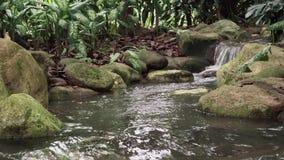 Tropisk djungelvattenfall lager videofilmer
