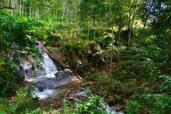 Tropisk djungelvattenfall i grön tropisk skog Royaltyfri Foto
