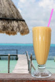 tropisk drink royaltyfri foto