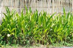 Tropisk exotisk heliconiaväxt Royaltyfria Foton