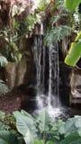 Tropisk exotisk vattenfall med växter omkring arkivbilder