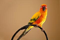 tropisk fågel arkivbild