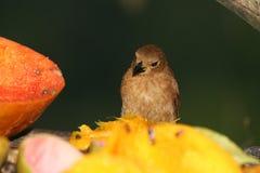 tropisk fågel 3 Arkivfoto