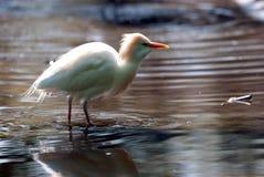 Tropisk fågel Arkivbilder