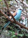 Tropisk fågel Royaltyfri Foto