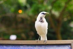 Tropisk fågel royaltyfria foton