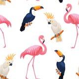 Tropisk fågelmodell seamless texturvektor Royaltyfri Illustrationer