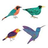 Tropisk fågeluppsättning exotisk fauna Isolerade beståndsdelar royaltyfri illustrationer