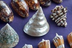 Tropisk för havshelveten för marin- liv bakgrund för samling Royaltyfria Foton