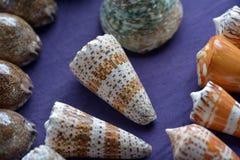 Tropisk för havshelveten för marin- liv bakgrund för samling Royaltyfri Foto