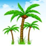 Tropisk för palmträd himmel igen Arkivfoton