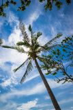 Tropisk ferie under blå himmel Arkivfoto