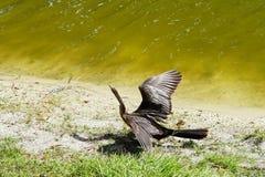 Tropisk fågel Arkivfoto