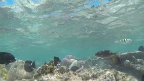 tropisk fisk stock video