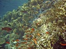 tropisk fisk arkivbilder