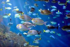 tropisk fisk royaltyfri foto