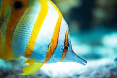 tropisk fisk Arkivfoton