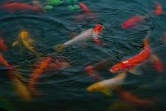 tropisk fisk Royaltyfri Fotografi