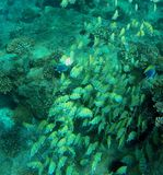 Tropisk fisk för färg Arkivbild