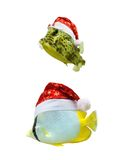 Tropisk fisk för jul i den isolerade santa hatten Arkivbild