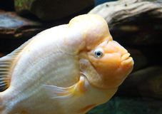 Tropisk fisk i akvarium salt varelse på för havet, hav Royaltyfri Foto