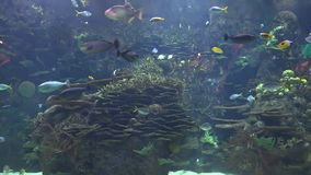 Tropisk fisk i behållare stock video
