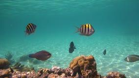 Tropisk fisk i havet Arkivbild