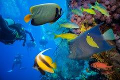 Tropisk fisk och korallrev Arkivbild