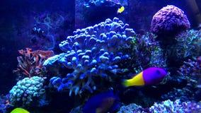 Tropisk fisk på akvariet för havsvatten arkivfilmer