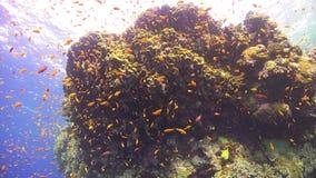 Tropisk fisk på vibrerande Coral Reef arkivfilmer