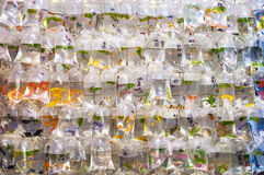 Tropisk fisk som hänger i plastpåsar på den Mong Kok guldfiskmarknaden, Tung Choi Street, Hong Kong royaltyfri fotografi