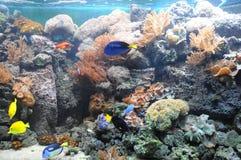 tropisk fiskbehållare arkivfoto